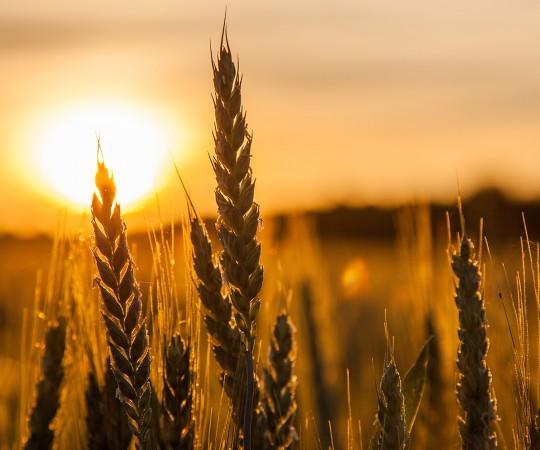 Sorting the wheat from the chaff